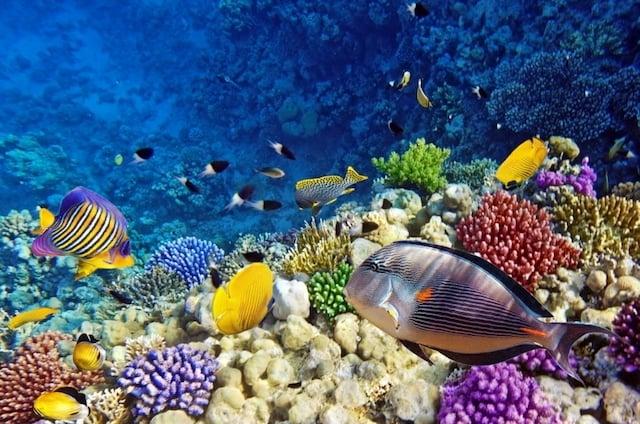 Corais e peixinhos do Aquário de Barcelona