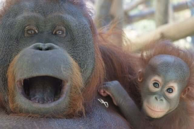 Macacos do Zoológico de Barcelona