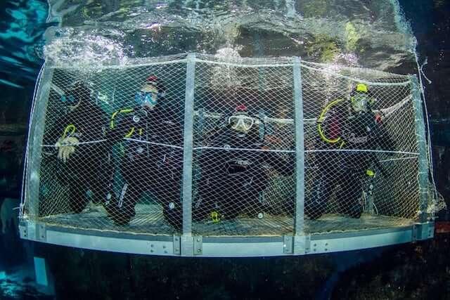 Mergulhar com tubarões no aquário de Barcelona