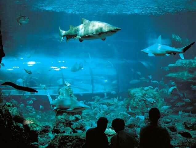 Visita ao aquário de Barcelona