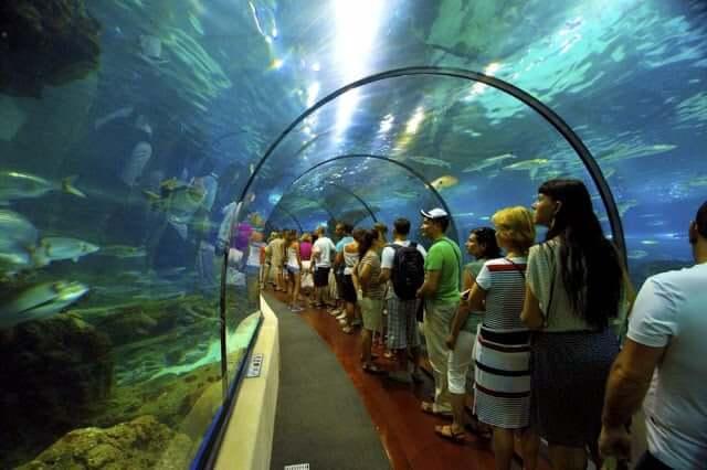 Atrações do Aquário de Barcelona - túnel
