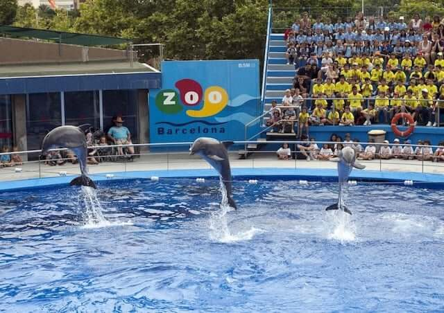 Espetáculo dos golfinhos no Zoo de Barcelona
