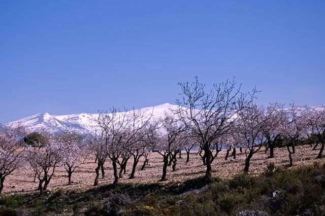 Clima Sierra Nevada em Granada - vegetação