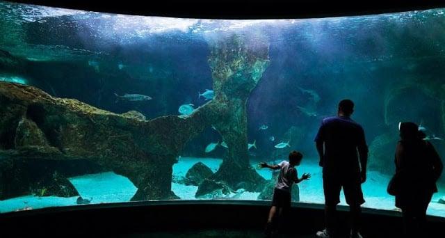 Aquário no Zoo Aquarium de Madri