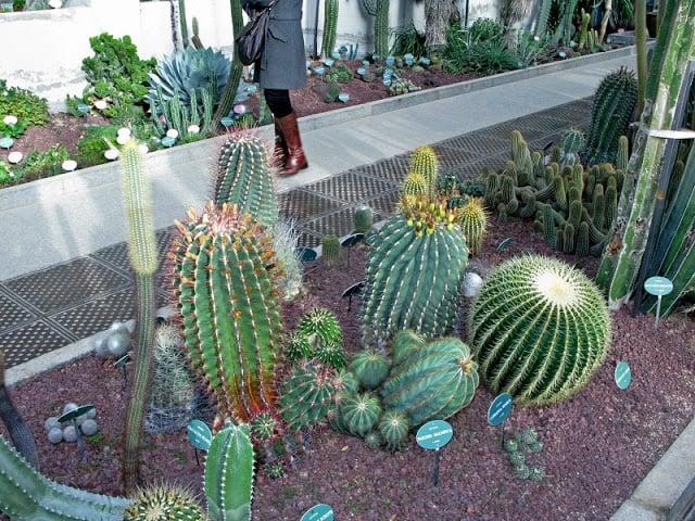 Cactos do Real Jardim Botânico de Madri