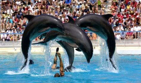 Show dos golfinhos no Zoo Aquarium Madri