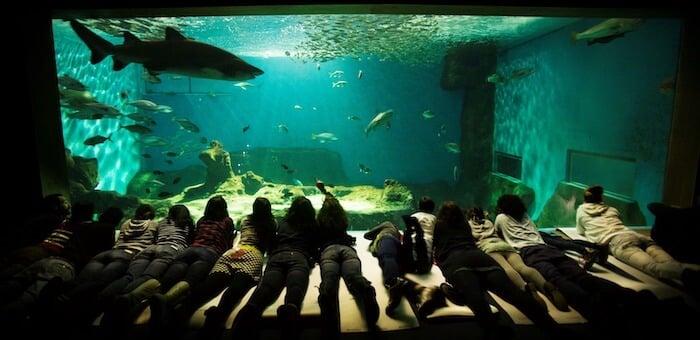 Visitar o Aquário de Sevilha