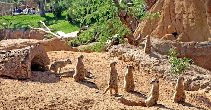Animais no Valencia Bioparc