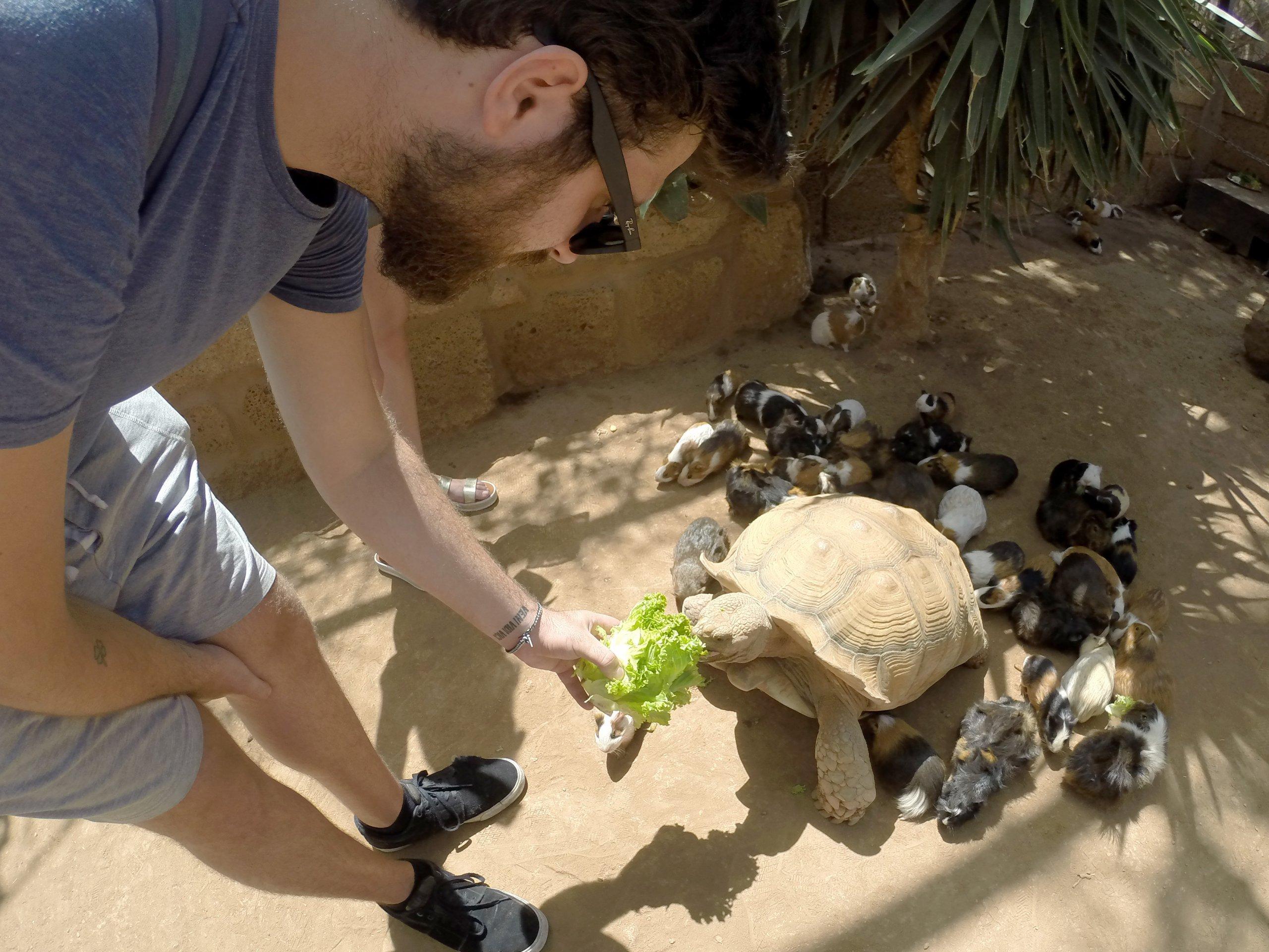 Alimentando os animais no Monkey Park Tenerife