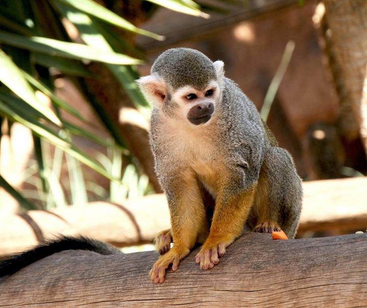 Animais no Monkey Park Tenerife