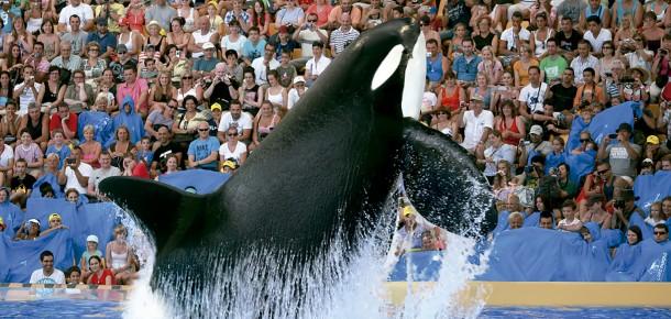 Show de baleias no Loro Parque em Tenerife